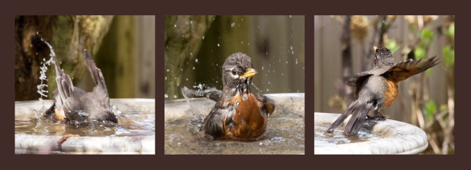 Bath-time fun for baby robin.