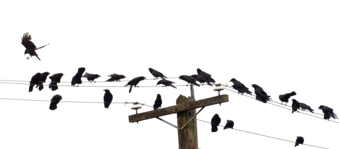Crow Protest Group