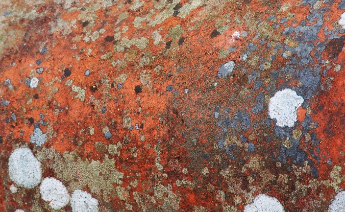 Portmeirion Red Lichen