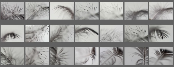 feather photos