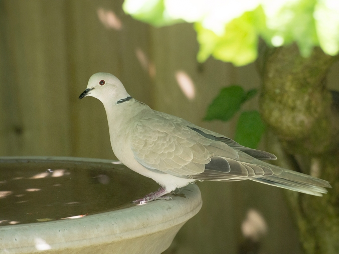Everyone ends up at the birdbath