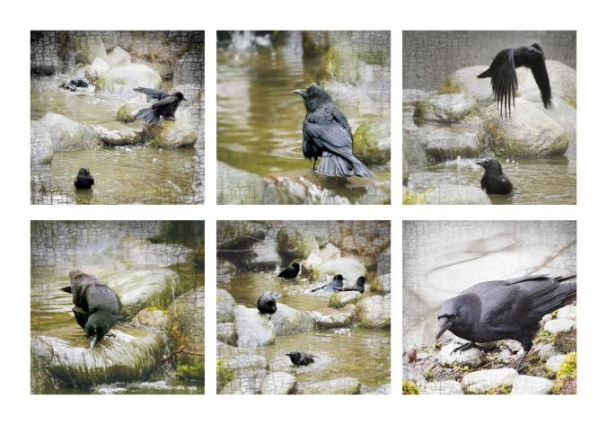 spa crows