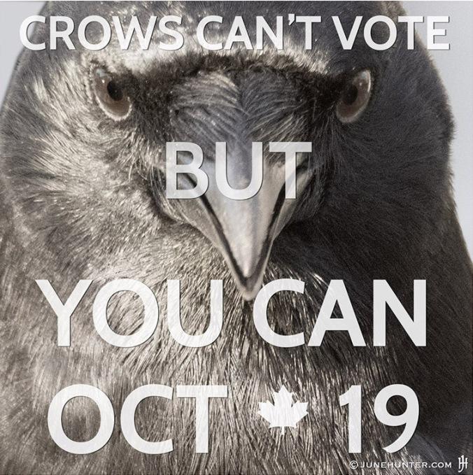 CROW VOTER