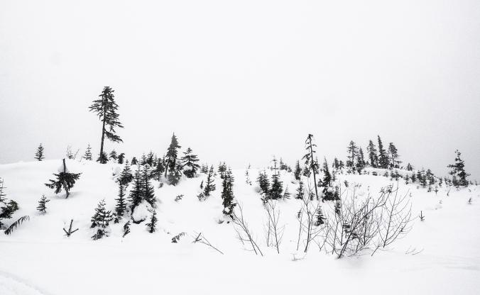 Snow, trees and sky. Mount Washington, Vancouver Island.
