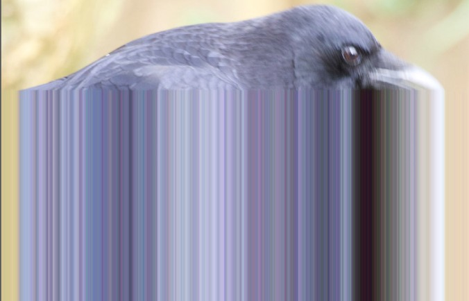 Crow Colour Abstract