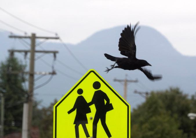 Crow Crossing © June Hunter 2016 www.junehunter.com