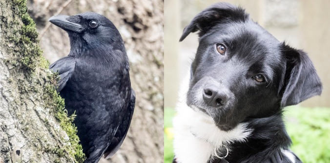 Crow and Dog © June Hunter 2016 www.junehunter.com