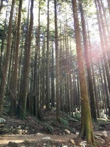 sun in trees