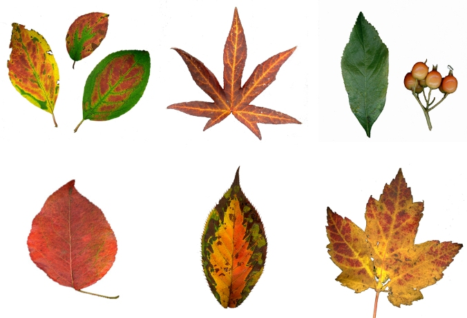 leaf-collection-2