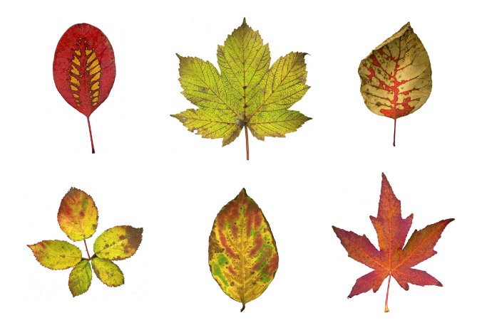 leaf-collection-white