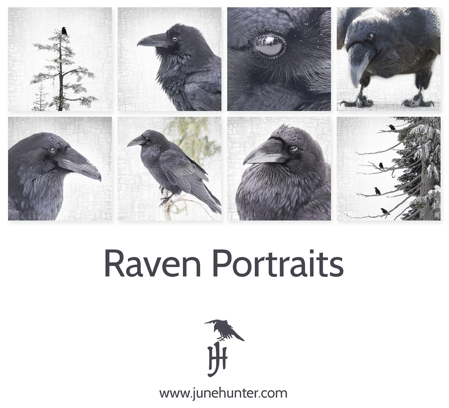 Learning to Speak Raven | The Urban Nature Enthusiast