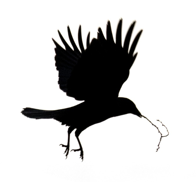 Crow with twig