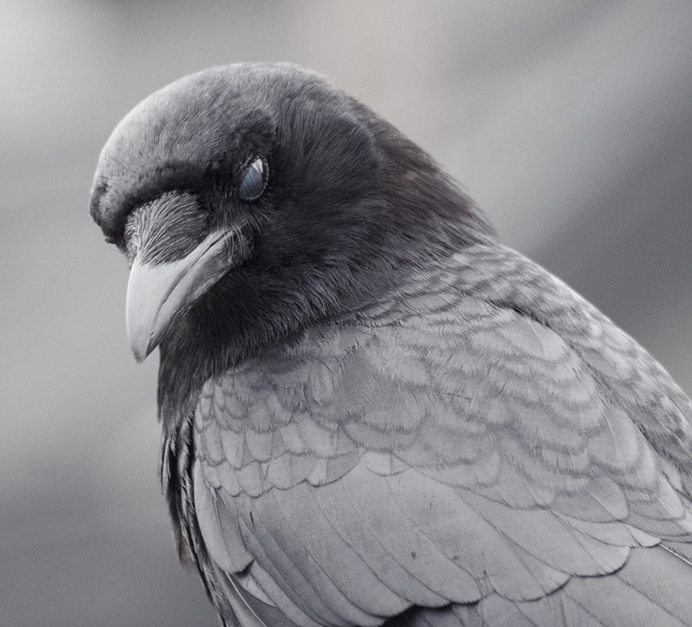 Moody Crow