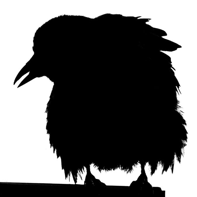 Ruffled Crow Silhouette