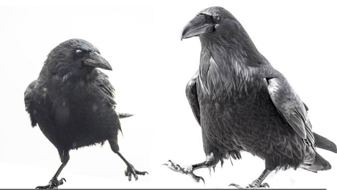 Crow Raven Dancers