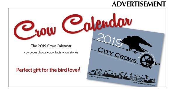 crow calendar Sept