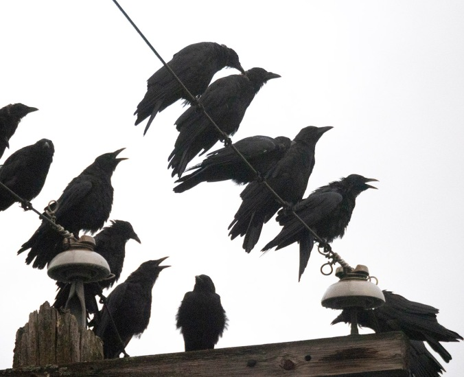 Crow Choir