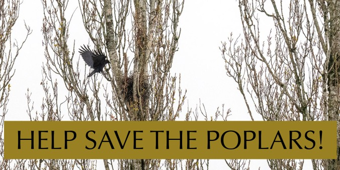 Help Save the Poplars