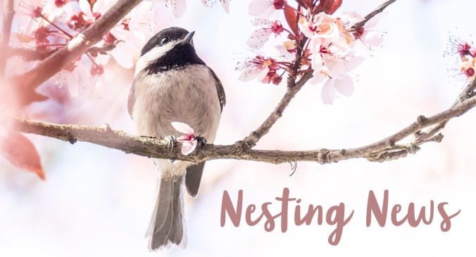Nesting News Chickadee and Blossom