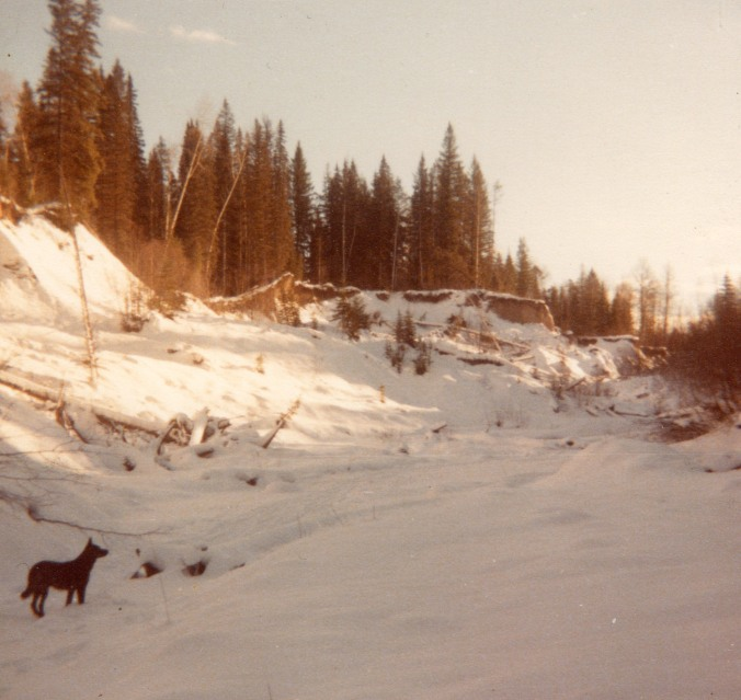 finlay in creek in winter