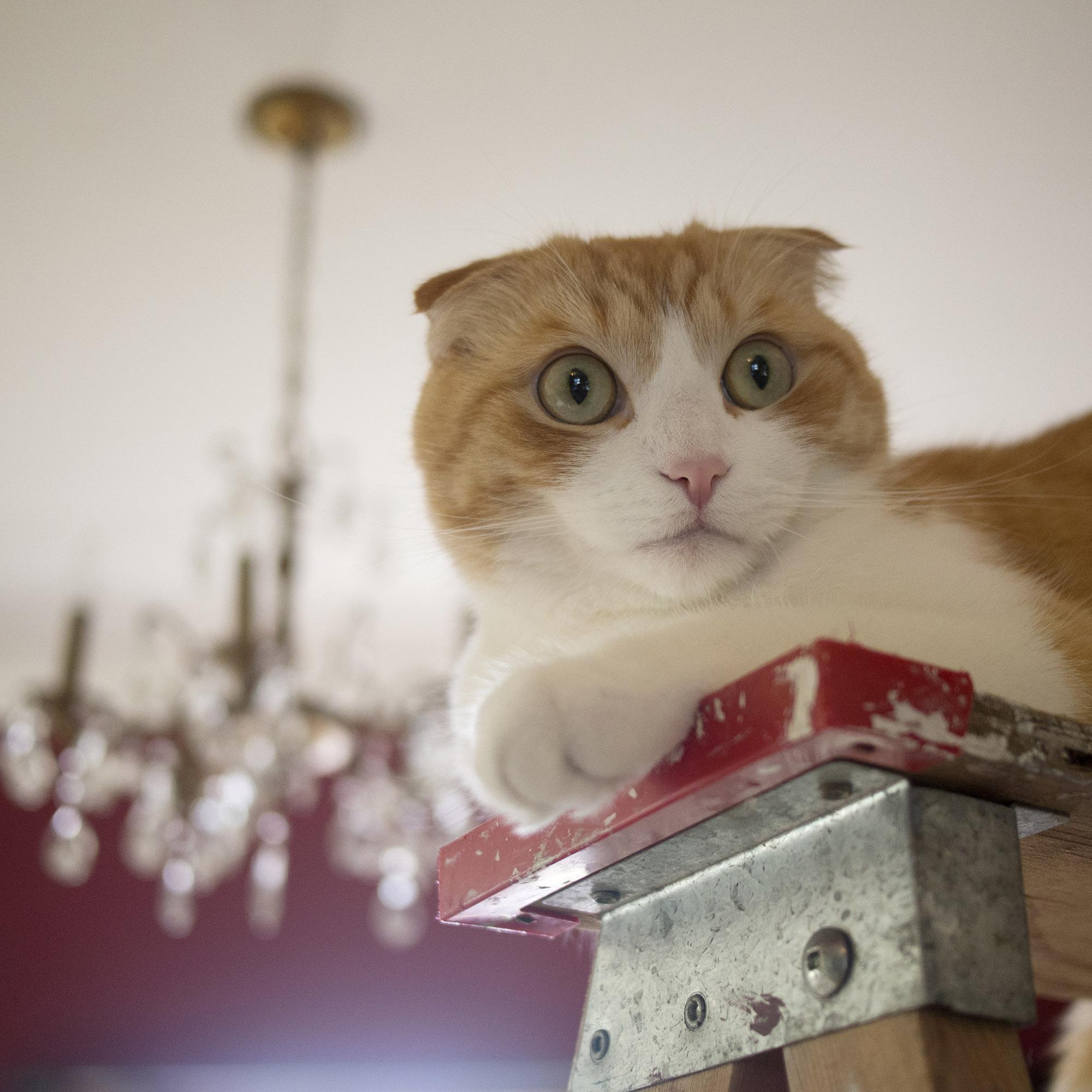 Edgar on his ladder